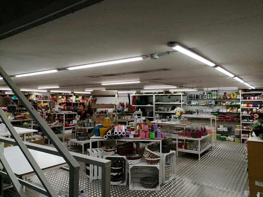 Renovación luminaria Seleflor